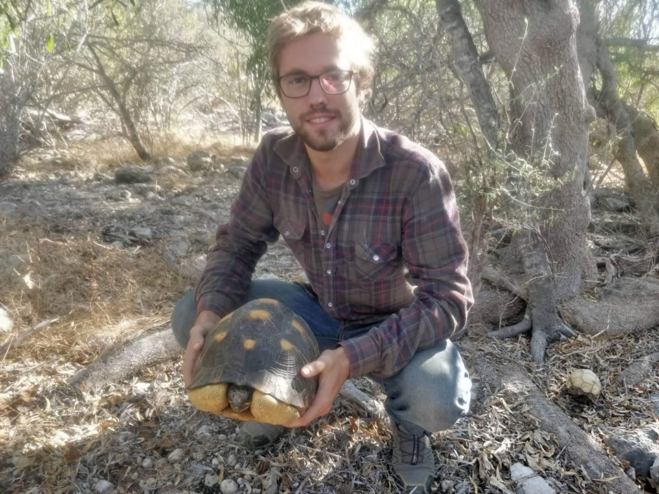 The inventories of radiated tortoises continue on the field